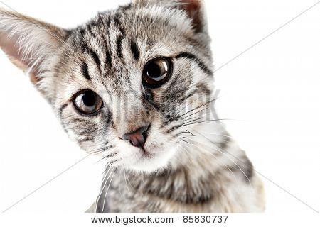 Portrait of cute kitten isolated on white