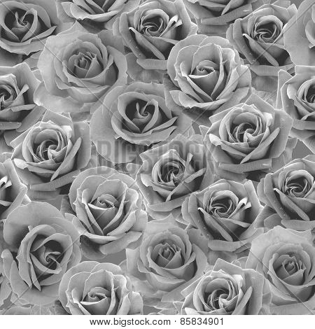 Gray Roses seamless pattern