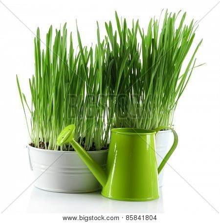 Fresh green grass in small metal bucket and decorative watering can, isolated on white