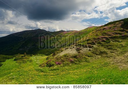 Summer landscape. Sunny day in the mountains. Blooming rhododendron on the mountain slopes. Carpathian Mountains, Ukraine