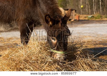 The donkey on a farmstead eats a grass
