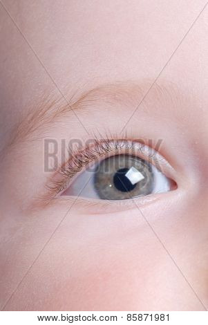 Beautiful Baby Eye
