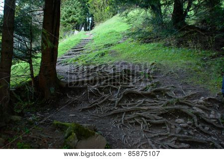 Winding mountain path