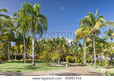 Park With Coconut Palm Trees, Dominican Republic