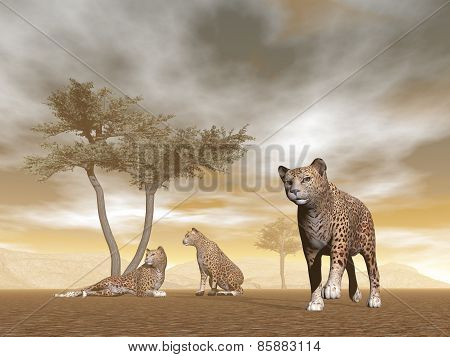 Jaguars in the savannah - 3D render