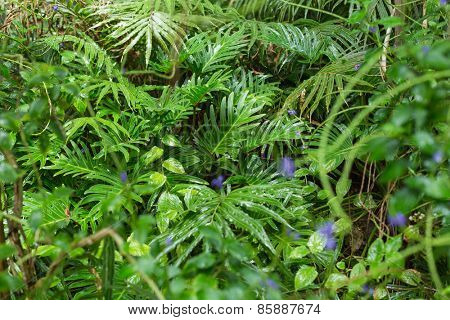Green ferns in tropical forest in close up