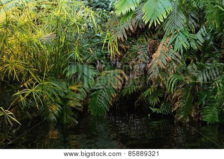 Green ferns in tropical forest hanging over water
