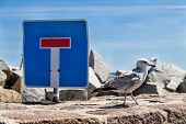 foto of mole  - Sea gull and traffic sign on the mole in Sassnitz  - JPG