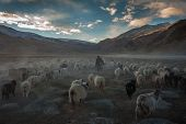 picture of nomads  - Changpa Nomad - JPG