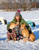 stock photo of pit-bull  - Young woman with two dogs of breed American Pit Bull Terrier winter  - JPG