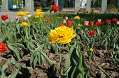 pic of chrysanthemum  - The photo flowerbed city park planted with flowers - JPG