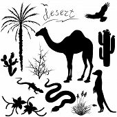 stock photo of hump  - Set of silhouettes of desert plants and animals - JPG