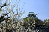 picture of kinky  - Osaka Castle and plum blossoms in spring season - JPG