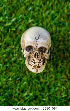 close up human skull on green grass background