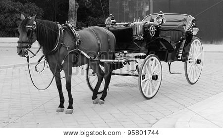 Horse and cart Spain