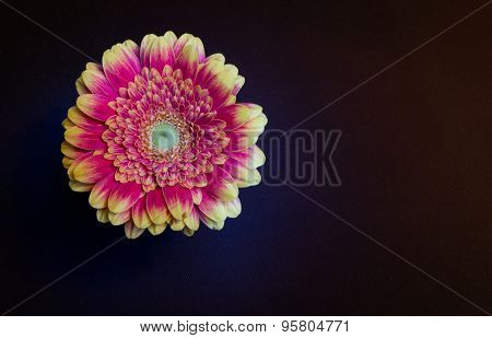 Close-up Of Beautiful Orange And Red Chrysanthemum
