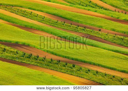 Striped fields of South Moravia in summer, Czech Republic