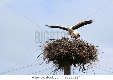 Storks on the nest on a background of blue sky