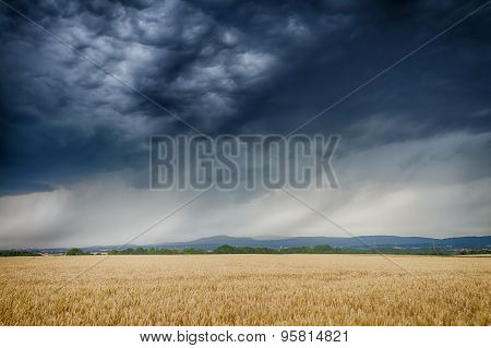 Thunderclouds Over A Golden Wheat Field