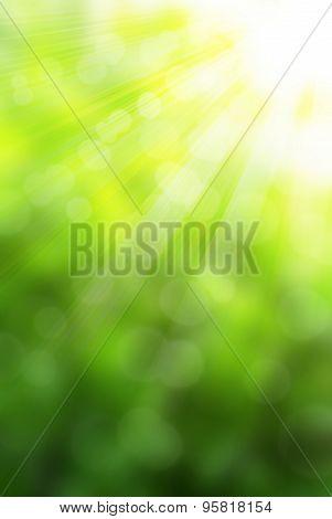 Sunny Green Backgroud