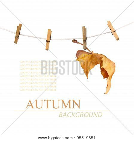 Maple Branch Hanging On Clothesline Isolated On Background