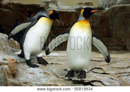 King penguin (Aptenodytes patagonicus). Wild life animal.