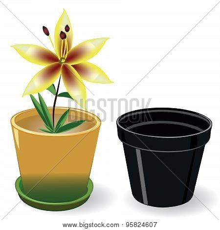 Growing flower in a pot and black empty pot