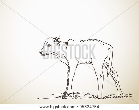 Sketch of calf, Hand drawn vector illustration