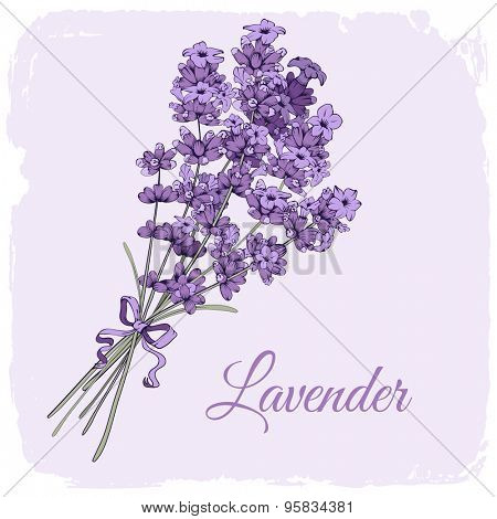Vintage background with hand drawn floral elements in engraving style - fragrant lavender bouquet. Vector illustration.