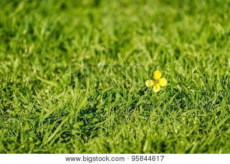 Yellow Flower In The Grass