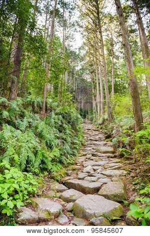 Matsumoto Pass on the Kumano Kodo, a sacred trail and World Heritage site  near Kumano City, Japan.