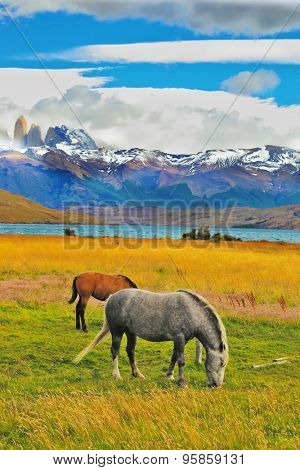 Lake Laguna Azul in the mountains. On the shore of Lake grazing horses. The national park Torres del Paine, Chile