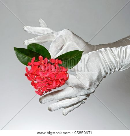 White Elegant Woman's Gloves Holding Heart Shaped Flowers On White Background