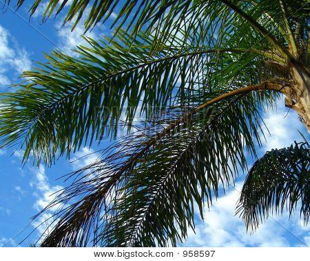 Palm Close