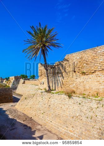 The ancient Caesarea, Israel. Lone palm tree growing on the rocks