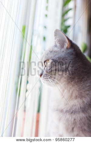 home cute striped cat at the window