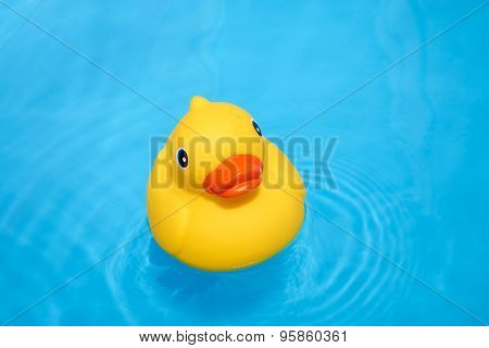 Yellow Rubber Duck In The Pool