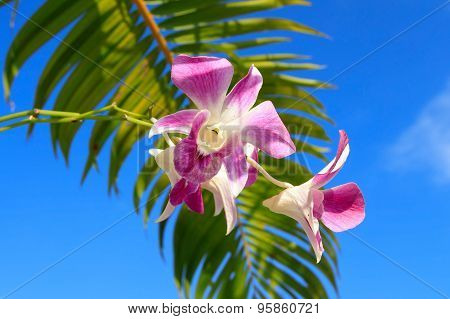 Orchid With Palm Leaf Close-up