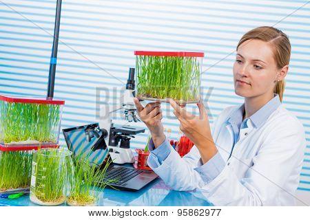 Technician in laboratory Research green plants