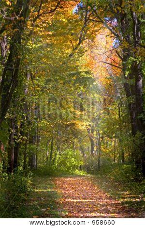 Sendero de hojas de otoño