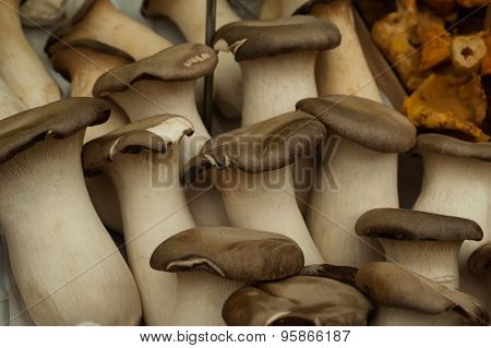 King Oyster Mushrooms Sold On Market