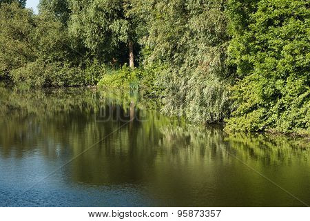 Trees Reflected In The Mirror-smooth Water Surface