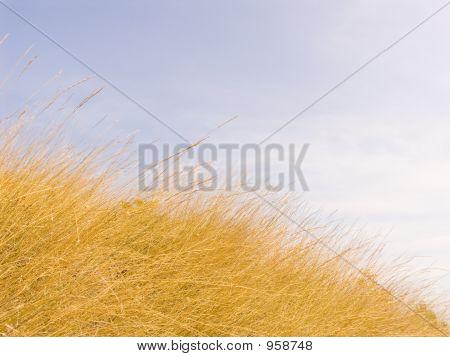 Gelbe getrocknetem Gras