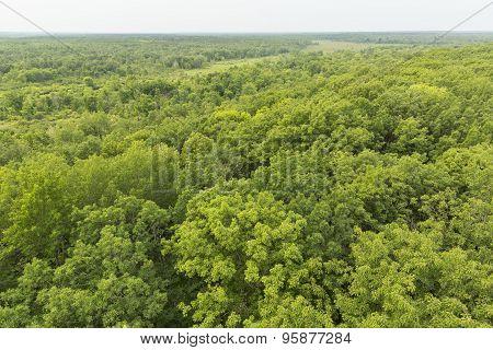 Summer Treetops