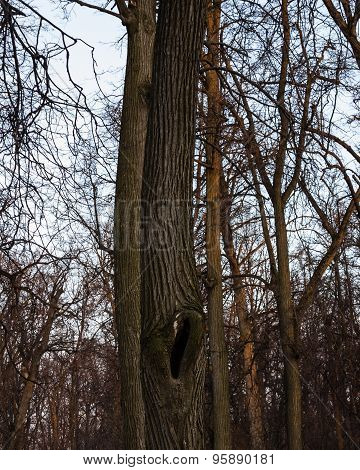 Hollow on the tree