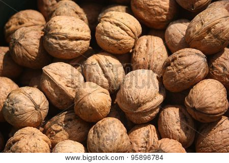 Nut, Fruit Of Wallnut, Juglans Regia L.