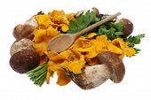 picture of bolete  - Mushrooms boletes and golden chanterelle against white background - JPG