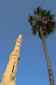 stock photo of mosk  - A mosque and palm in Alexandria Egypt - JPG