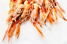 stock photo of shrimp  - Shrimp cocktail background over white Ice on a market stall close up - JPG