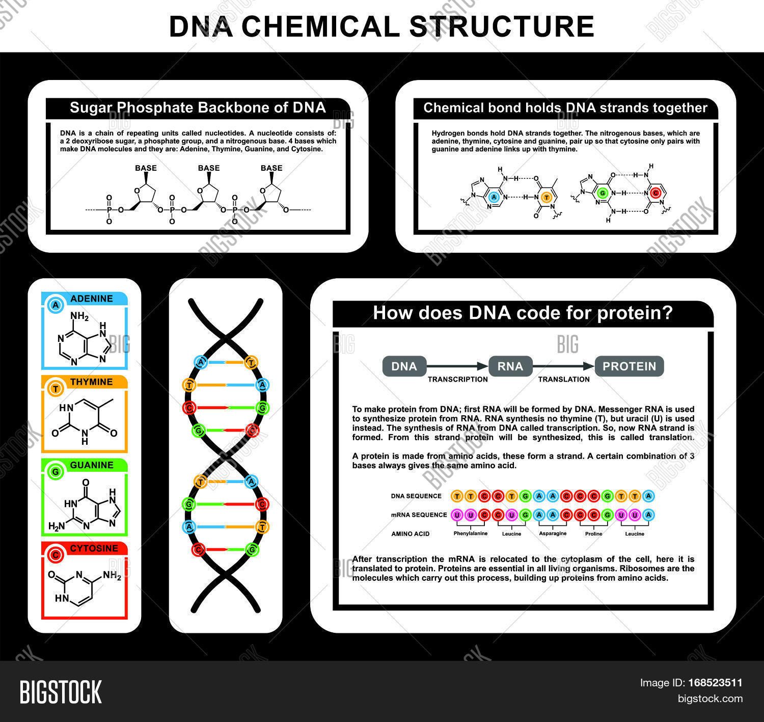 Dna chemical structure details image photo bigstock dna chemical structure details of strands compounds adenine thymine guanine cytosine in human body cell genes sciox Image collections